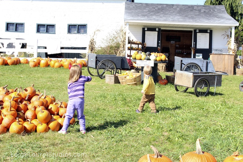 Pumpkin hunting 2