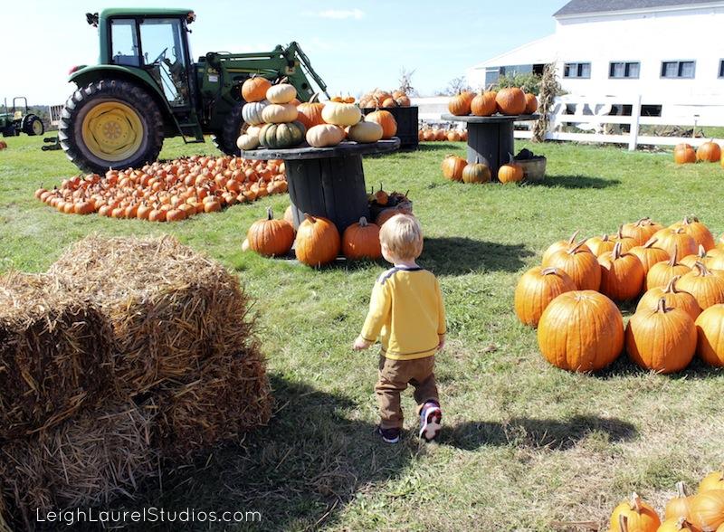 Pumpkin hunting 1