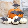 Bats n pumpins