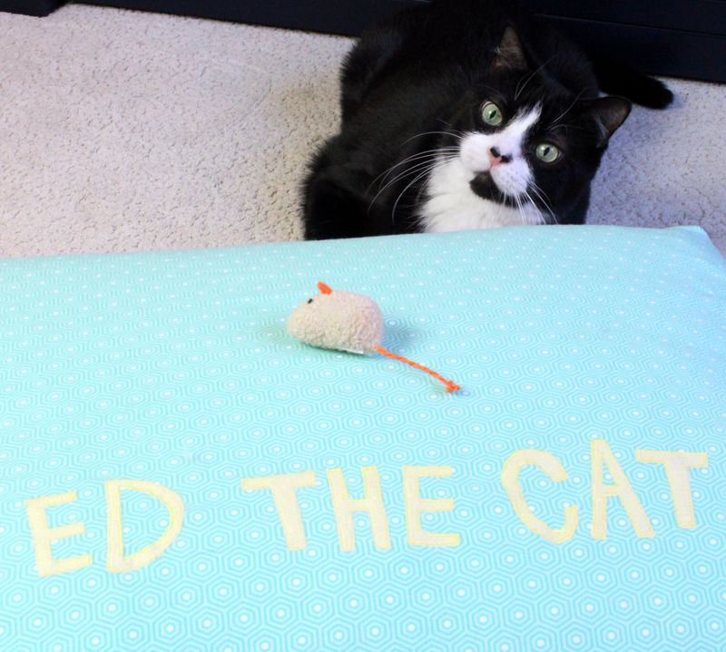Ed the cat bed 19