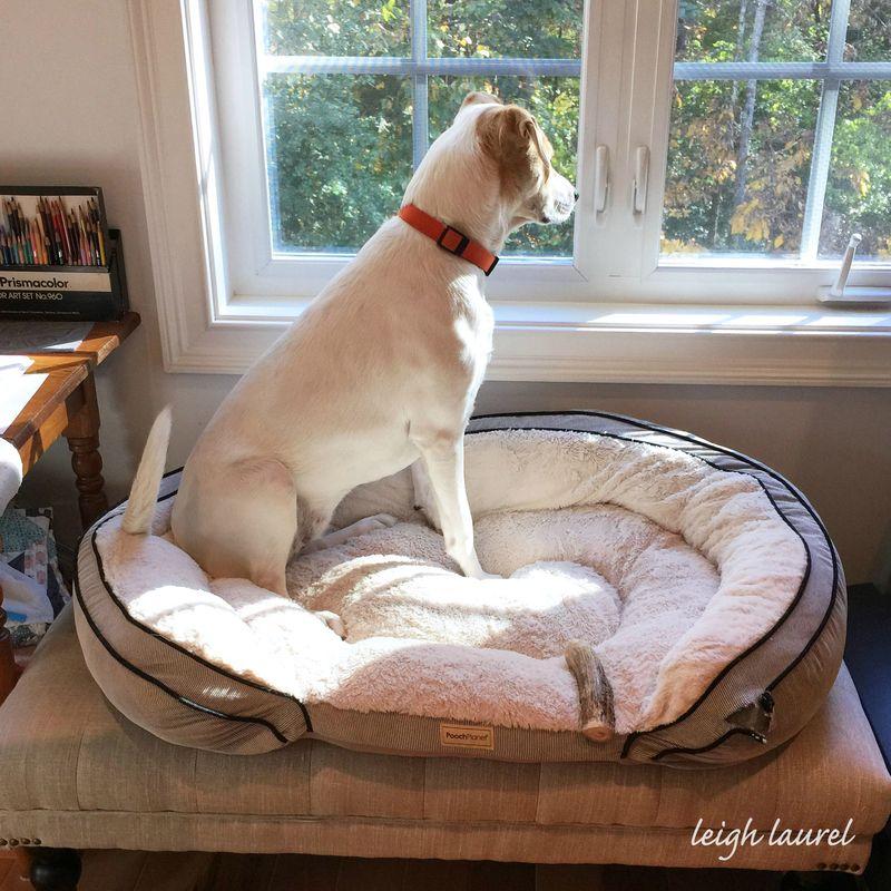 Lulu in kj studio window
